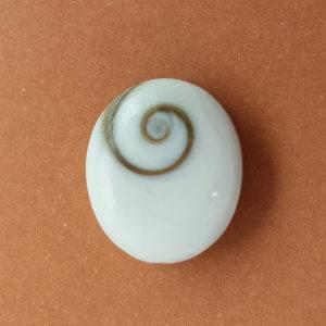 Spiral-Operculum